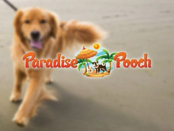 Paradise Pooch